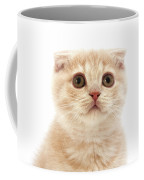 Scottish Fold Creme Coffee Mug