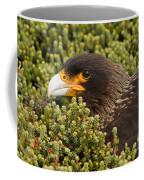 Striated Caracara Coffee Mug