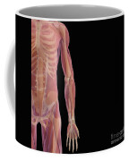 The Musculoskeletal System Coffee Mug