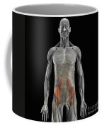 The Psoas Muscles Coffee Mug