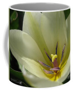 Tulip Named Perles De Printemp Coffee Mug