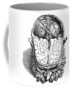 Vesalius: Brain, 1543 Coffee Mug