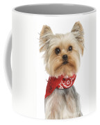 Yorkshire Terrier Dog Coffee Mug