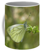 Nature And Travel Images Coffee Mug