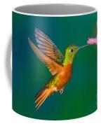 Chestnut-breasted Coronet Coffee Mug