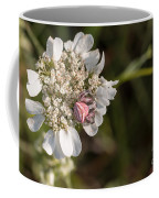 Flower Crab Spider Coffee Mug