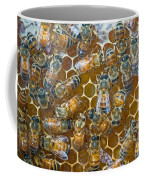 Honey Bees In Hive Coffee Mug
