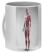 Muscle System Coffee Mug