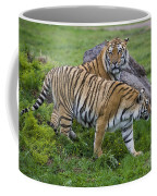 Siberian Tigers, China Coffee Mug