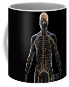 The Nerves Of The Upper Body Coffee Mug