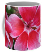 Zonal Geranium Named Candy Fantasy Kiss Coffee Mug