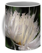 Centaurea Named The Bride Coffee Mug