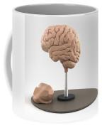 Clay Model Of Brain Coffee Mug