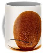 Fertilization Coffee Mug