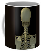 Bones Of The Head And Neck Coffee Mug