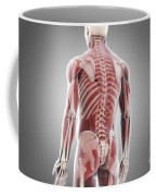 Human Muscles Coffee Mug