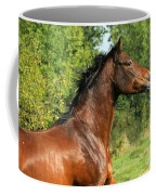 The Bay Horse Coffee Mug