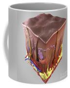Anatomy Of Human Skin Coffee Mug