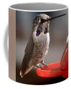 Female Anna's Sitting On Perch Coffee Mug