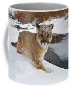 Mountain Lions In The Western Mountains Coffee Mug