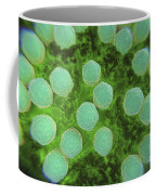 Rubella Virus Coffee Mug