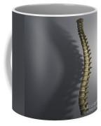 Spinal Anatomy Coffee Mug