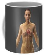 The Cardiovascular System Female Coffee Mug