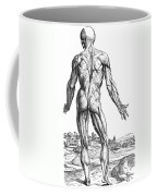 Vesalius: Muscles, 1543 Coffee Mug