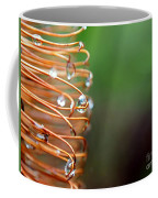 A Banksia Flowers Hold On Water Coffee Mug
