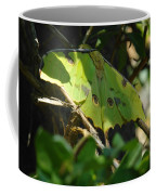 A Buttterfly Resting Coffee Mug