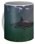 A Carribbean Reef Shark Swims Coffee Mug