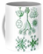 A Collection Of Stauromedusae Coffee Mug