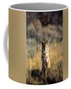A Coyote Canis Latrans Stares Coffee Mug