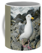 A Curious Seagull Coffee Mug