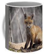 A Cute Kit Fox Portrait 1 Coffee Mug