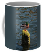 A Drake Mallard Perches On A Piling Coffee Mug