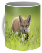 A Fox In The Grass  Montreal, Quebec Coffee Mug