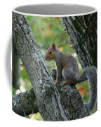 A Gray Squirrel Pose  Coffee Mug