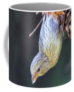 A Little Bird Eating Pine Cone Seeds  Coffee Mug by Jeff Swan