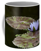 A Little Lavendar Water Lily Coffee Mug