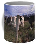 A Lot Of Bulls Coffee Mug by Skip Willits