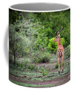A Male Impala In Lake Manyara National Park. Tanzania. Africa. Coffee Mug