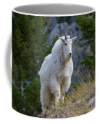 A Mountain Goat Stands On A Grassy Coffee Mug