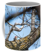 A Pair Of Red-bellied Woodpeckers Coffee Mug