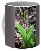 A Pink Ladys Slipper Orchid Prepares Coffee Mug