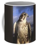 A Prairie Falcon At Dusk Coffee Mug