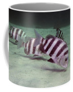 A School Of Sheepshead Feeding Coffee Mug by Michael Wood