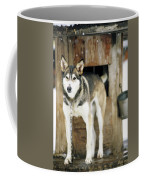 A Sled Dog Stands By Its Kennel Coffee Mug
