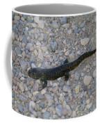 A Slow Salamander  Coffee Mug