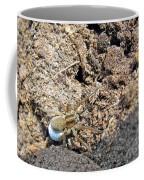 A Spider With The Egg Sack Coffee Mug